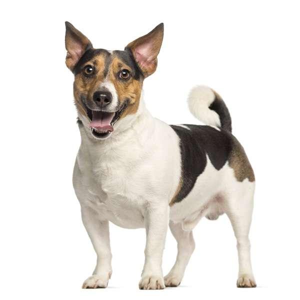Libri sui cani for Tequila e bonetti cane razza