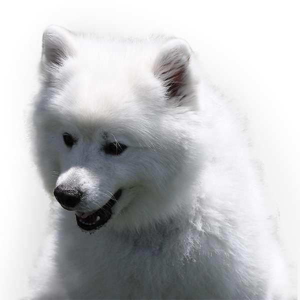 cane Eskimos