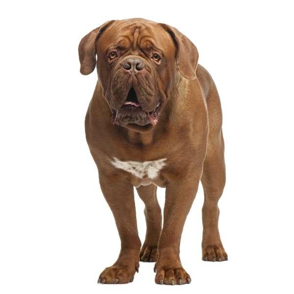 8 cani pi famosi nella televisione for Cane tequila e bonetti