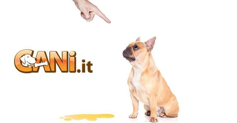 Insegnare al cane dove fare la pip senza farla nel tappeto o a casa - Cane pipi letto ...
