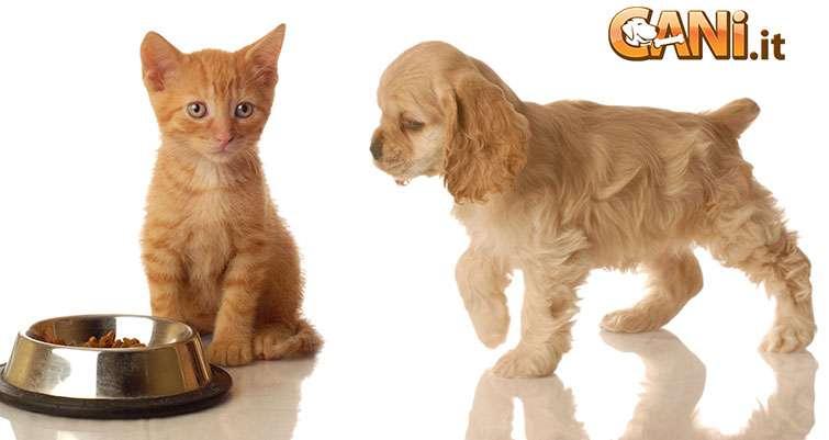 è Pericoloso Se Un Cane Mangia Il Cibo Del Mio Gatto