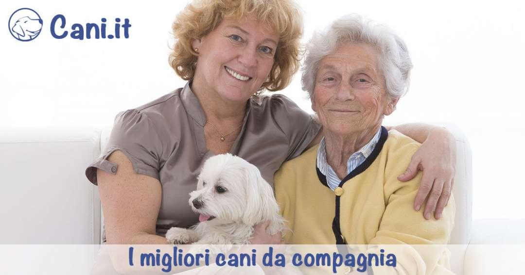 Cani Da Appartamento Tranquilli ~ duylinh for