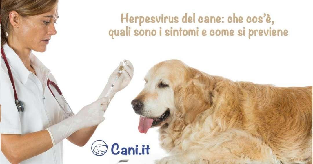 Herpesvirus del cane che cos quali sono i sintomi e for Quali sono i rettili