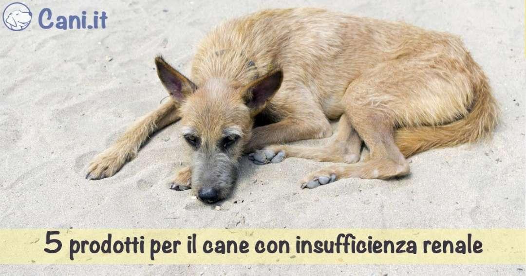 dieta renale fatta in casa per cani