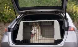 Educare il cane al trasportino