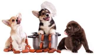 Cosa deve mangiare un cucciolo?