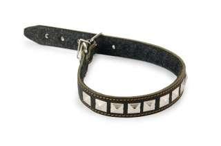 Come scegliere il collare perfetto per il tuo cane