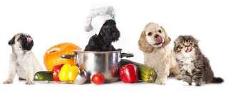 Alimenti che non vanno assolutamente dati ai cani
