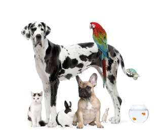 Come far convivere il cane con altri animali