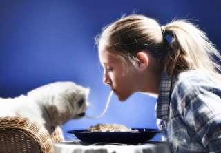 Cani: cibo fai da te o industriale?