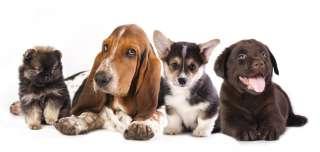 Quale razza di cane scegliere
