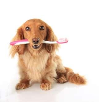 Cura dei denti del cane