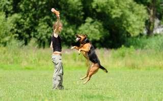 Giochi interattivi per cani