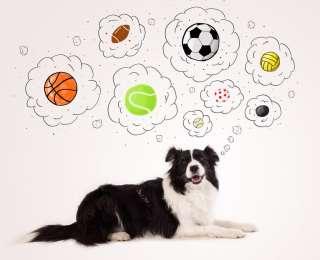 i migliori giochi per cani