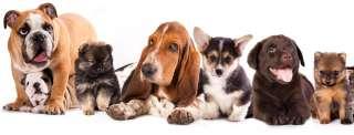 La dieta giusta per il cane a seconda della sua taglia