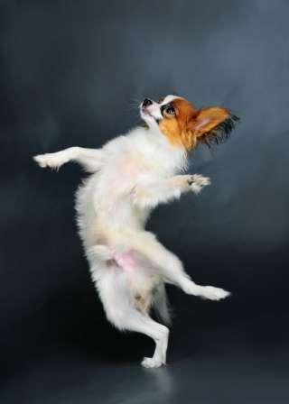 Come insegnare al tuo cane a ballare