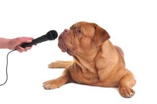 Insegnare al cane ad abbaiare a comando: ecco come si fa