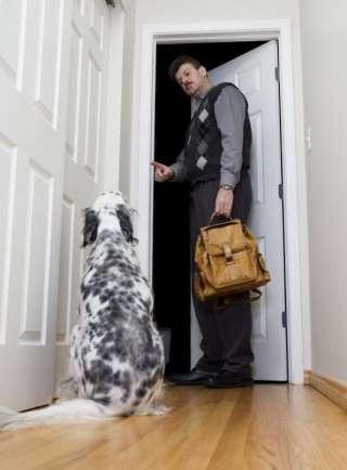 Ecco come insegnare ad un cane a non scappare con la porta aperta