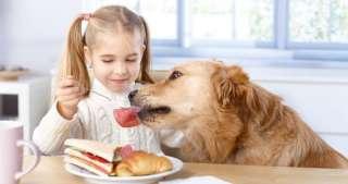 Addestrare un cane a non chiedere cibo a tavola