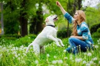 Il problem solving: l'attivazione mentale per un cane sempre in forma