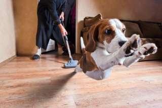 Regole di igiene domestica quando si ha un cane in casa