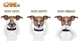 Le razze canine più