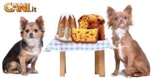 Cosa non dare da mangiare ai cani a Natale