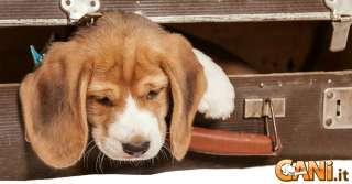 Come riconoscere e combattere la depressione nel cane