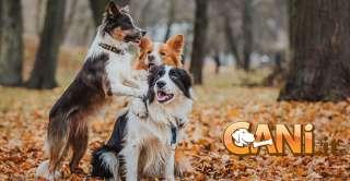 Come far socializzare il cane per non farlo attaccare altri cani o persone in maniera inaspettata