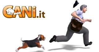 Insegnare al cane a non saltare addosso alle persone