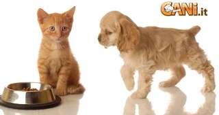 È pericoloso se un cane mangia il cibo del mio gatto?