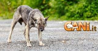 Parliamo della rabbia nei cani