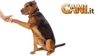 Come sapere se i cani sono destri o mancini