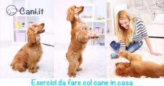 Esercizi da fare col cane in casa durante l'inverno