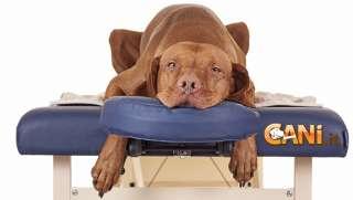 Come fare un massaggio rilassante al cane