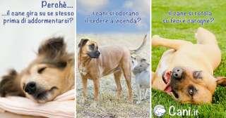 I 3 perchè dei cani