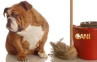 Come rimuovere l'odore dell'urina dei cani e realizzare dei repellenti naturali