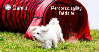Percorso agility fai da te per cani