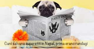 Cani salvano superstiti in Nepal, prima erano randagi