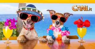 Disidratazione del cane: cause, sintomi e prevenzione