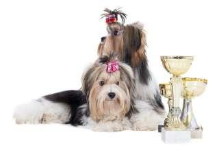 Esposizione canina, suddivisioni