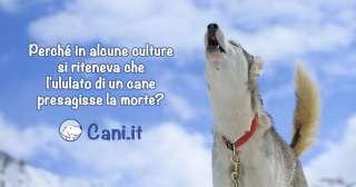 Perché in alcune culture si riteneva che l'ululato di un cane presagisse la morte?