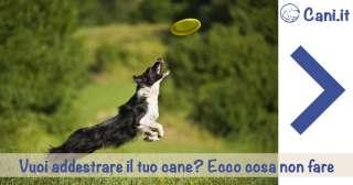 10 Errori comuni nell'addestramento del cane