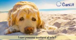 I cani possono scottarsi al sole?