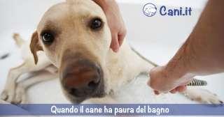 Quando il cane ha paura del bagno