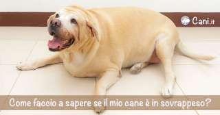 Come faccio a sapere se il mio cane è in sovrappeso?