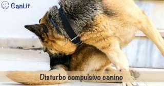 Disturbo compulsivo canino