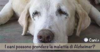 I cani possono prendere la malattia di Alzheimer?