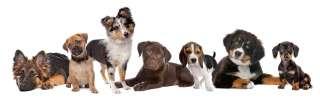 Adottare un cane: Pedigree ed anagrafe canile