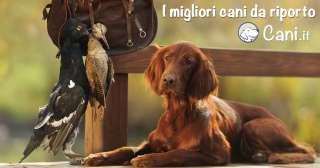 I migliori cani da riporto